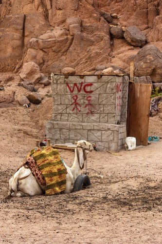 The camel wasn't using the WC